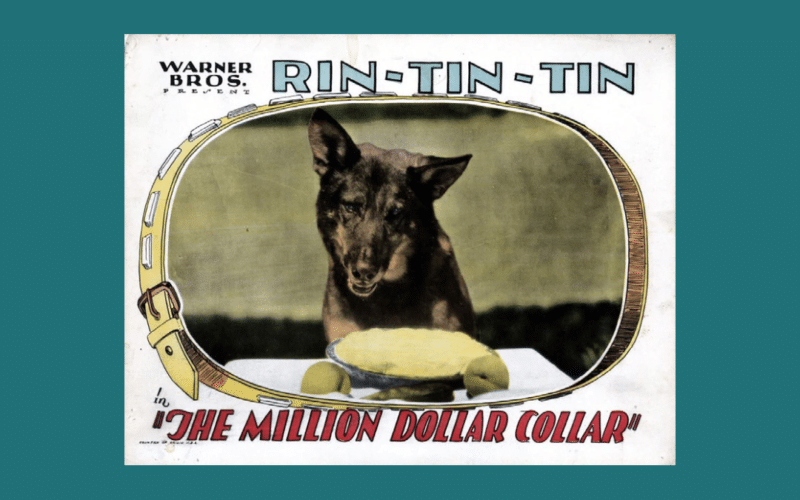 Rin Tin Tin is at the center of a new copyright lawsuit by Scott Duthie, who claims a 50% ownership interest in the character