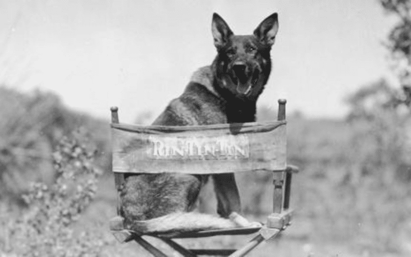 Rin Tin Tin is an the center of a new copyright lawsuit by Scott Duthie, who claims a 50% ownership interest in the character